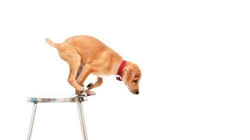 Kis lépés egy kutyának...