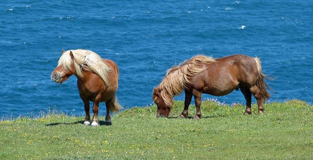 Egzotikus nyaralásra vagy cuki háziállatra is lehet spórolni (Fotó: Andrew / CC-BY)