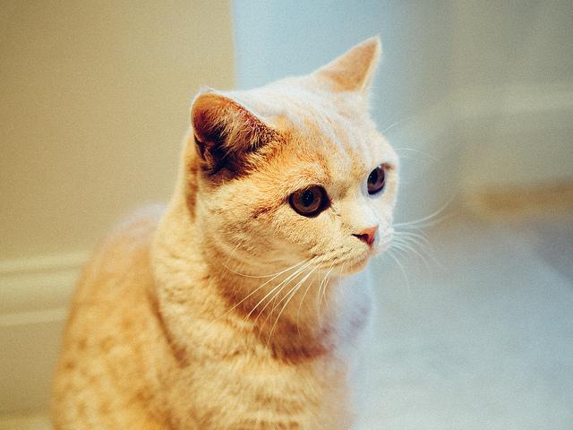 A Fintechradar tippje: macskából csakis igazit, és nem befektetésként (Fotó: Ravi CC-BY)
